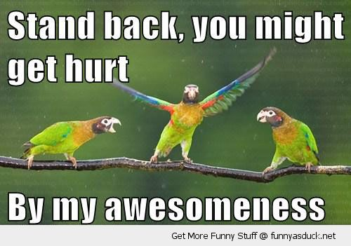 funny-parrots-birds-tree-branch-stand-back-hurt-awesomeness-pics